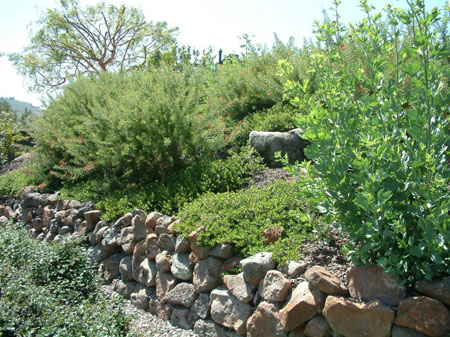 Terrace slopes and hillsides for Hillside rock garden designs