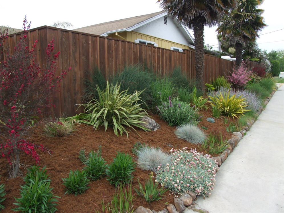 Well Mulched Shrub Border
