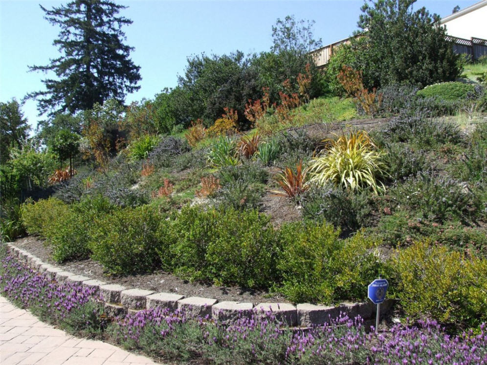 Pleasing hillside for Hillside landscaping plants